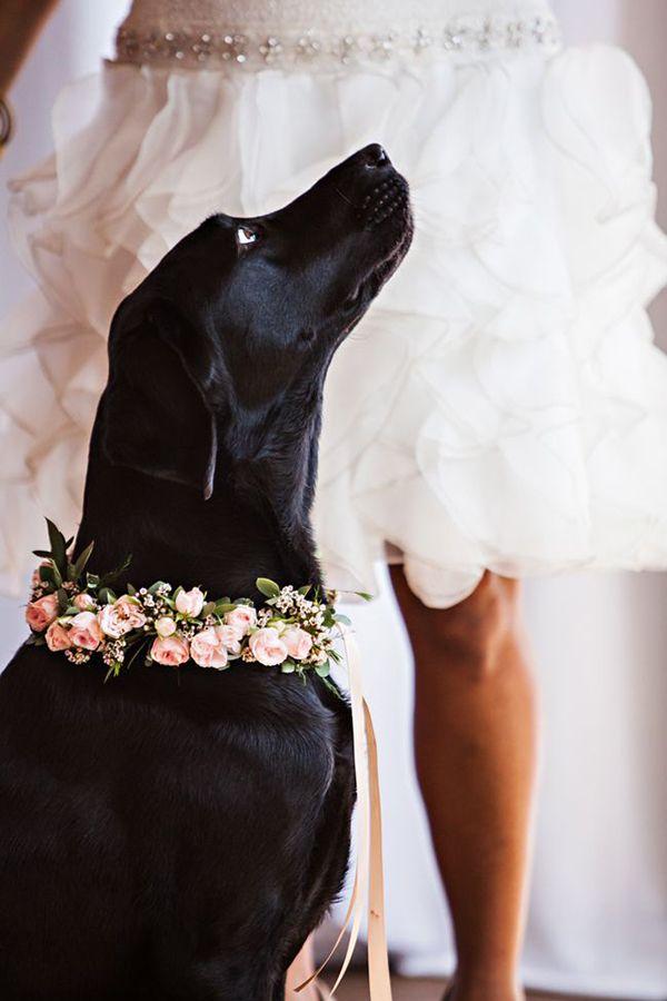 Cani al matrimonio per un servizio fotografico speciale