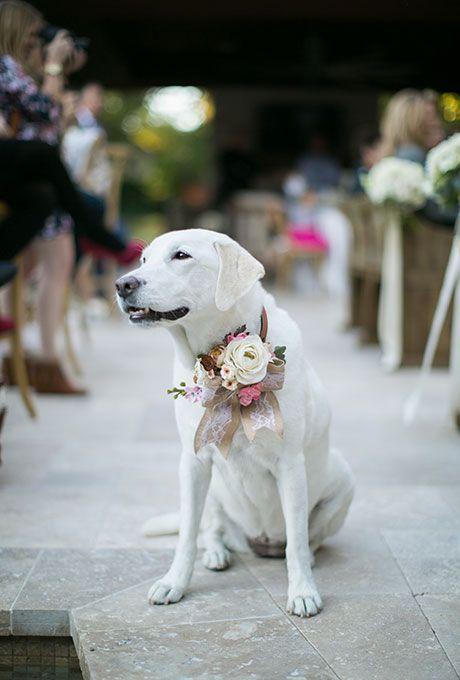Matrimonio con il cane
