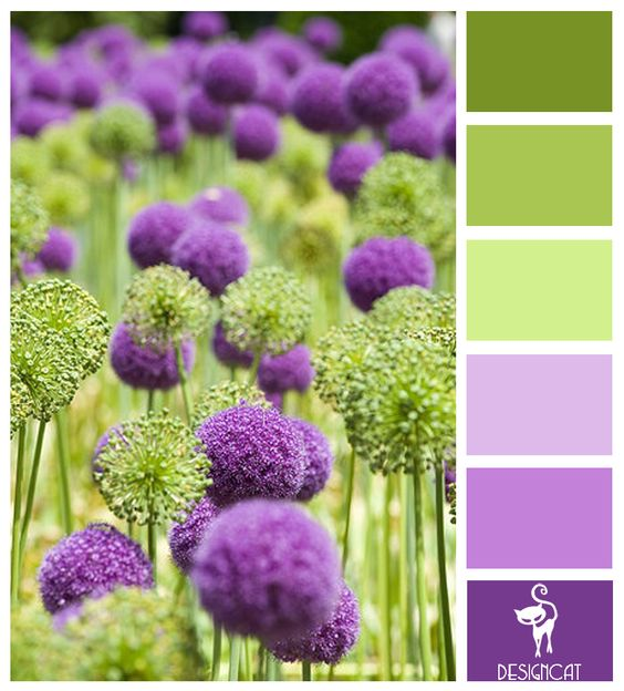 Allium per decorare casa e giardino