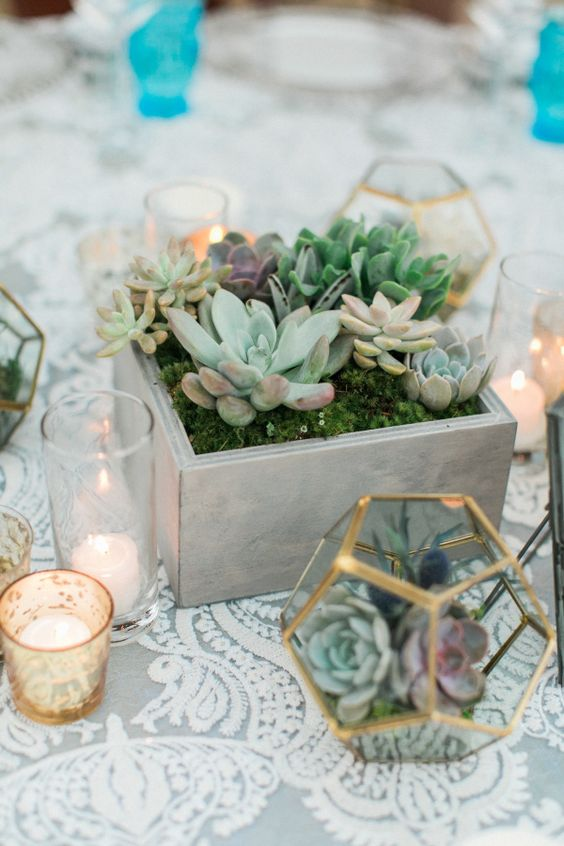 Centrotavola di succulente