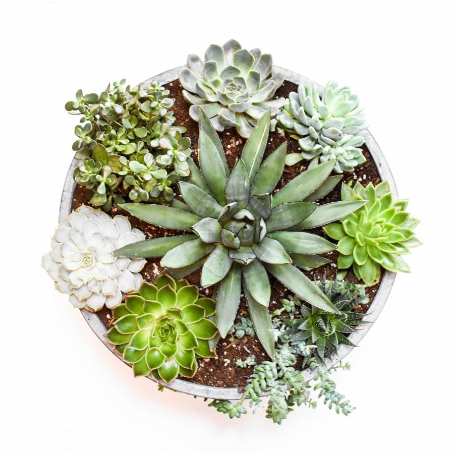 Centrotavola di succulente fai da te